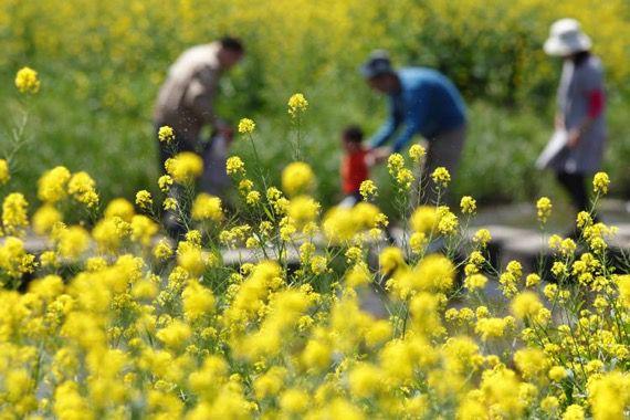 花粉症と酵素ドリンクを使ったファスティング記事の2枚目画像